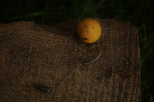 Rig mit 20mm Sweet Butternut