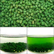 Boilie-Pellets grün